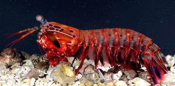 Play Poker Like an Octopus, Not Like a Mantis Shrimp 101