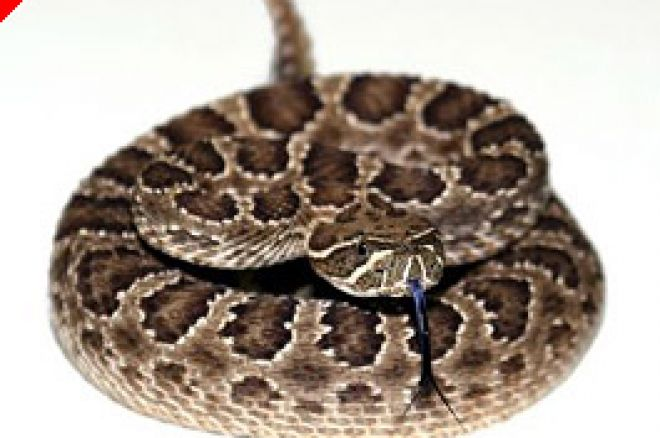 Rattlesnake Murder Plot Tied to Poker Related Debt 0001