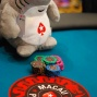 Poker shark and poker chips