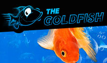 "Feeling Hungry? Check Out the ""Fish 'N' Chips"" Series at 888poker 101"