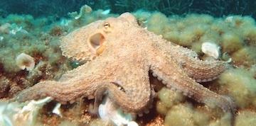 Play Poker Like an Octopus, Not Like a Mantis Shrimp 102