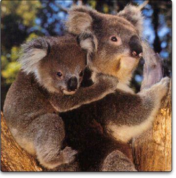 Pokerowe podróże - Śmietanka PokerNews: Aussie Millions - Melbourne 101