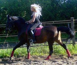 Sportiniai žirgai - Lauros šeimos verslas