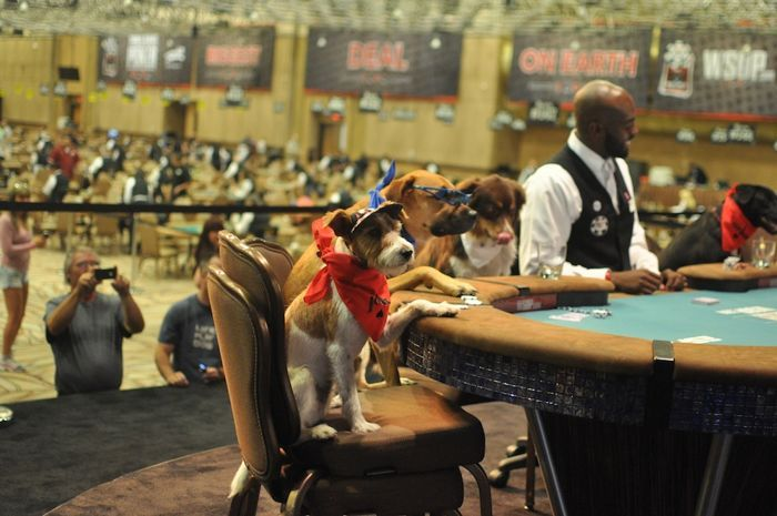 All Mucked Up: 2012 World Series of Poker Day 45 Live Blog 112