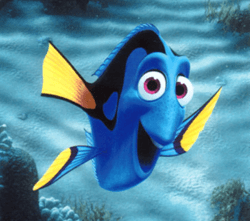 Gdzie jesteś moja rybko? 101