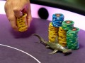 A Look Back at the PCA 0,000 Super High Roller 125