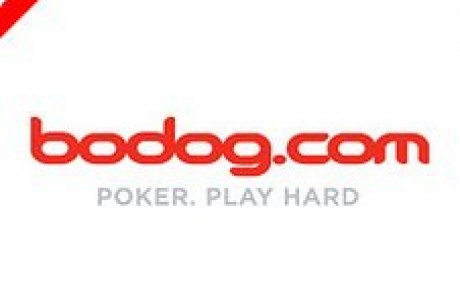 Jogue Com Os Profissionais Na Bodog Poker