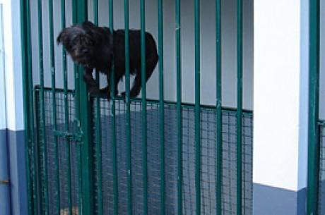 Ricardo Pereira Vence Torneio SPAD – Sociedade Protectora dos Animais