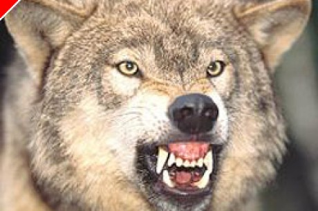 Ki mondta, hogy nem félünk a farkastól?!