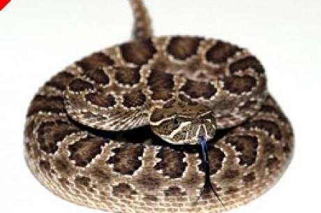 Tentativa de Homicídio com Cobras Cascavéis por Causa de Dívida de Poker
