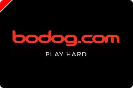 Bodog Poker Zufallszahlengenerator erhält Zertifizierung für England