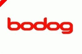 Bodog Poker Open III Začíná Koncem Dubna