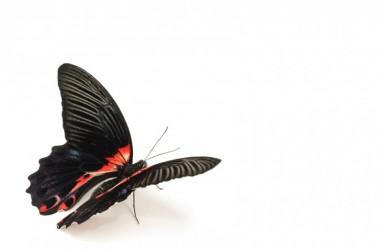 Покер психолог: Ефектът на пеперудата