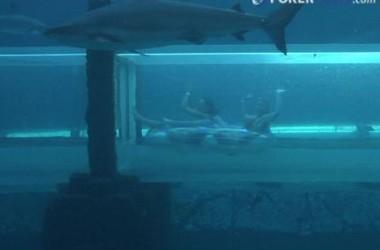 2011 PCA: Jízda mezi žraloky
