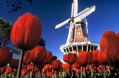 Легален онлайн покер в Холандия?