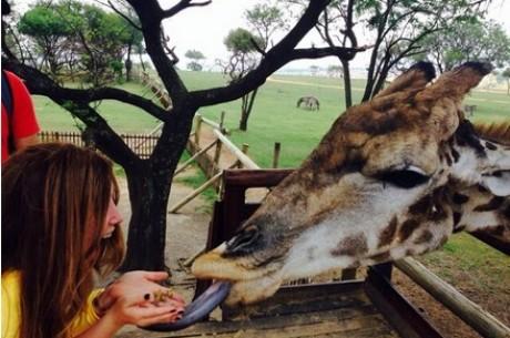 El lado más animal del WPT Sudáfrica