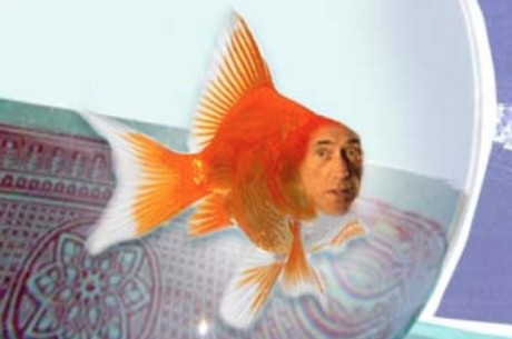 The Sunday Review: We've All Been Fish at One Time or Another