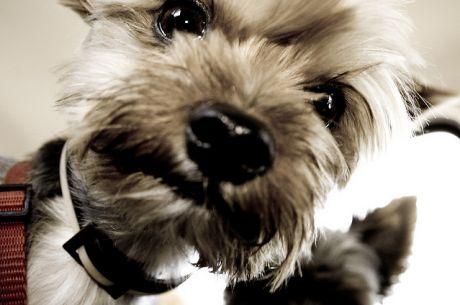 El ESCOOP vivió una jornada de enfrentamientos a cara de perro
