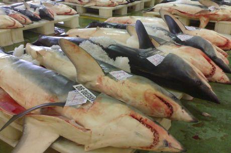'lorcho' se comió a los tiburones en el SuperJueves y ganó 8.188,88€