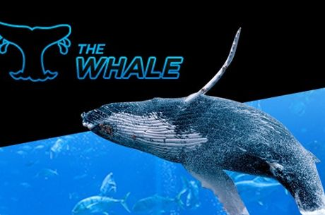 888poker Increases Jan. 15 Baby Whale Guarantee to $500K