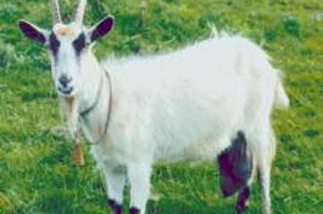 オンラインサイトは褒賞として'ポーカー・山羊(Goats)'を与える 0001
