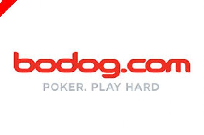 Bodog Poker Schriftzug