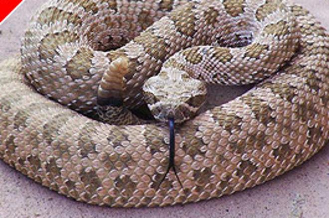 Csörgőkígyós Emberölés Pókeres Tartozás Miatt 0001