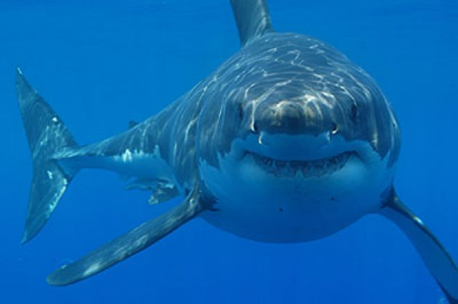 Clementine Hollink (Lady Shark) Interview 0001