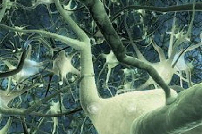 Las neuronas espejo del jugador de poker 0001