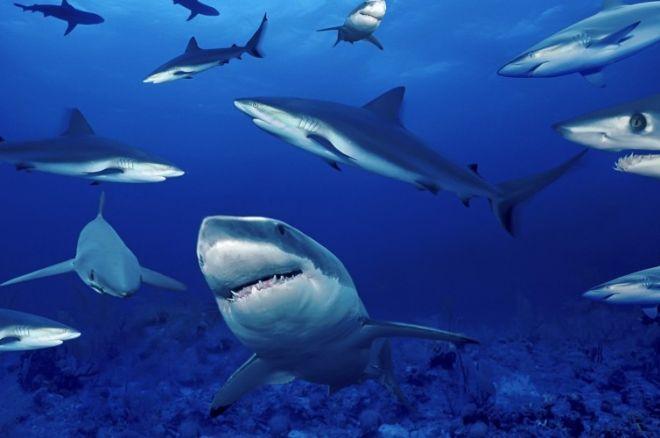 Да плуваш сред акулите: Преодолейте старите си... 0001