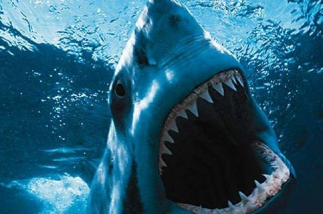 """VIDEO: Freddy """"sirfreddy83"""" Torres se vsadil, že skočí mezi žraloky a udělal to! 0001"""