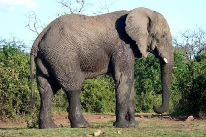 sitting with elephants or how to play against calling stations