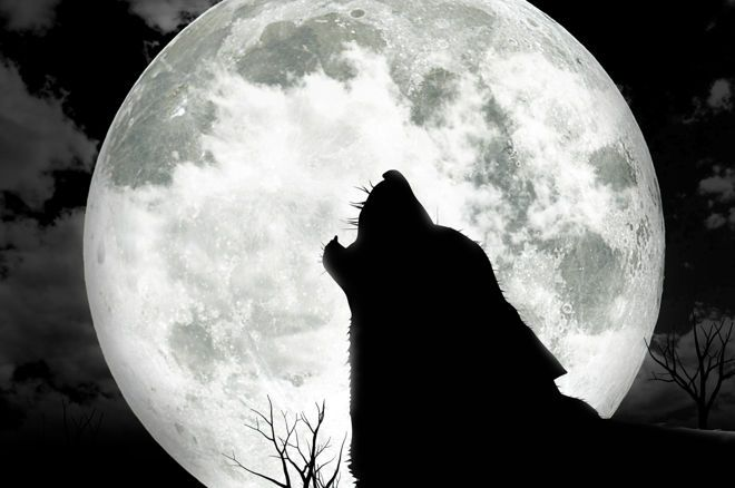 Werewolf is the name of the game that's hot with poker players away from the table right now.